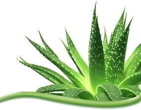 Ayurbedic Plant Ghritkumari Aloe Vera 3D asset