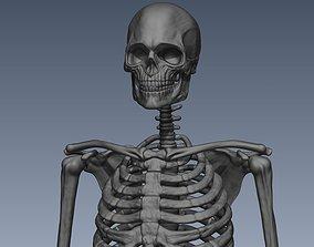 Skeleton hige poly model