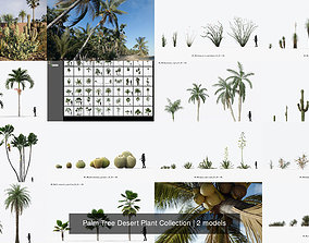 Palm Tree Desert Plant Collection 3D model