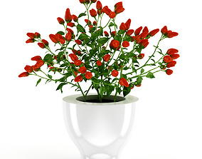 Paprika Plant 3D