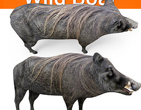 Wild Boar 3D Models game ready low poly model low-poly