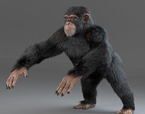 3D model Chimpanzee Maya