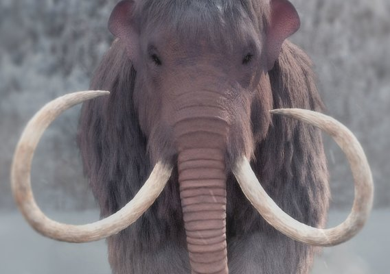 Mammuthus Primigenius - The Woolly Mammoth