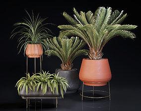 3D Plants Collection 01