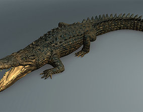 Salt Water Crocodile - Owen moloney crocodile 3D