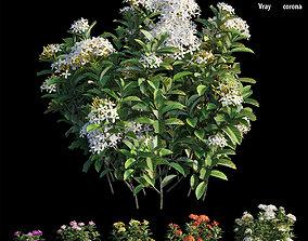 Ixora plant set 29 3D model gardening
