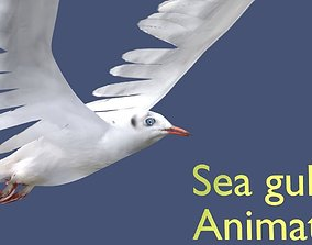 3D seagull animated