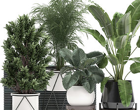 3D model Houseplants in a flowerpot for the interior 915