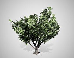 3D model Black Elder Flowers Tree