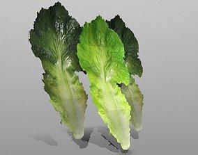 3D asset Lettuce Leaf
