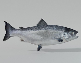 3D asset Salmon Fish