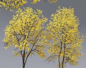 3D Ash-tree 03 04 autumn H17 18m