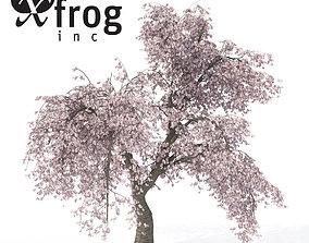XfrogPlants Weeping Higan Cherry 3D model