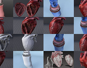 3D model Circulatory System and the Heart