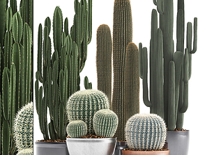 Collection of Exotic Cactus Plants 2 3D