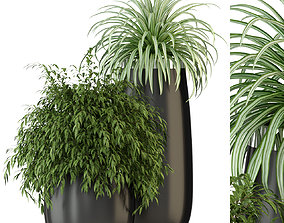 Plants collection 319 3D
