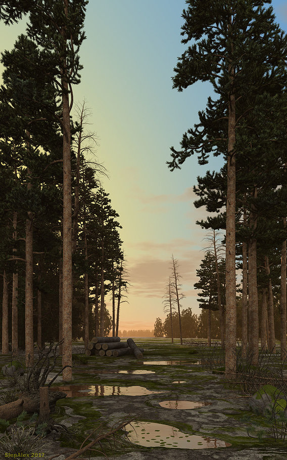 Evening in the pine forest