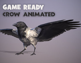 3D asset Animated white-breasted crow bird