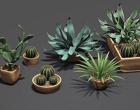 3D model Cactus Aloe Agave Century Plant