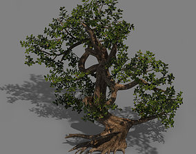Plant - cypress 3D model