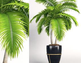 3D model Double palm in a pot