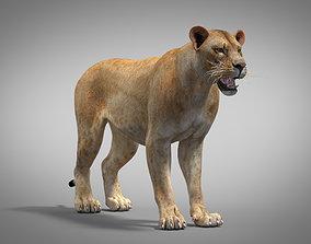 3D Lion Polygonal realistic