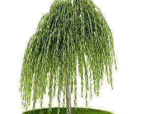 3D Sturdy Green Tree
