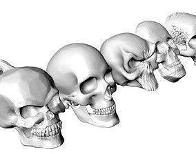 3D print model animal-skeleton Skull