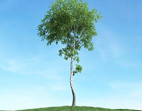 Mature Leaf Tree 3D
