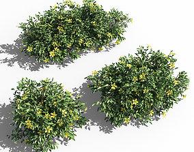 3D Hibbertia scandens bush