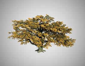 Big Leaf Maple Fall Tree 3D model