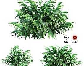 3D model Alpinia mutica trunk