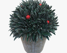 Plant in a pot 3D