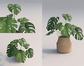 Monstera Room Plant 3D