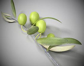 3D model Olive branch