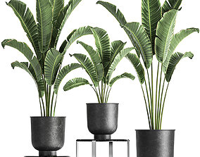 3D model Banana palm in a pot for the interior 846