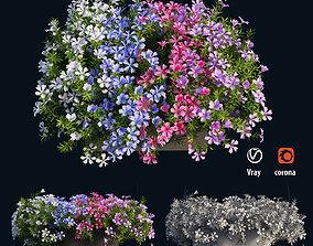 Plant Flower set 03 3D model bush