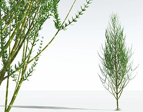 EVERYPlant Ridged Horsetail Tree 02 --12 Models--