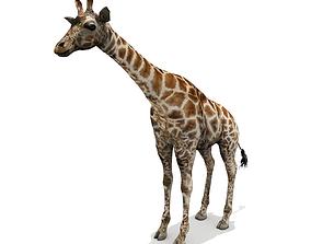 3D model Giraffe - Low Poly