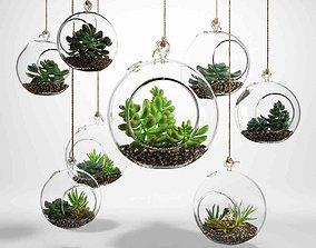 3D Sedum in a glass bowl