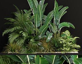 3D Plants collection 237