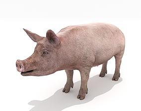 Realistic Pig 3D asset