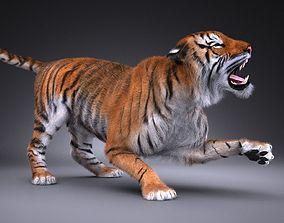 Sumatran Tiger for 3dsmax rigged