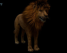 rigged Lion 3D animals