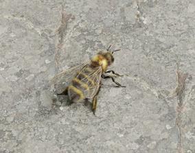 Honey bee 3D model animated