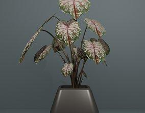 Indoor plant monstera 3D model