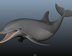 3D asset Bottle nose dolphin Animated