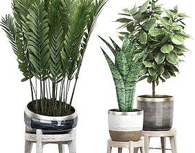 3D model Potted plants Set 38