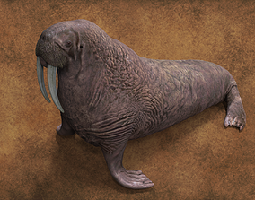 Walrus 3D model nature