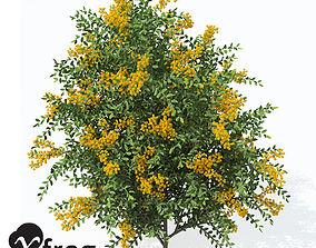 3D model bush XfrogPlants Scarlet Firethorn 1